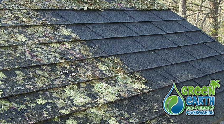 Palm Beach Roof Cleaning